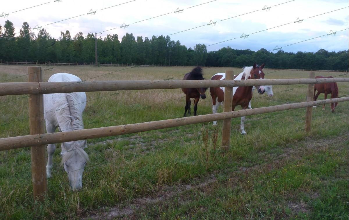 cl ture bois stallion sur mesure horse stop. Black Bedroom Furniture Sets. Home Design Ideas