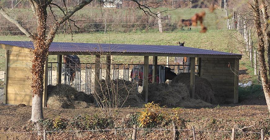 Abri chevaux distribution