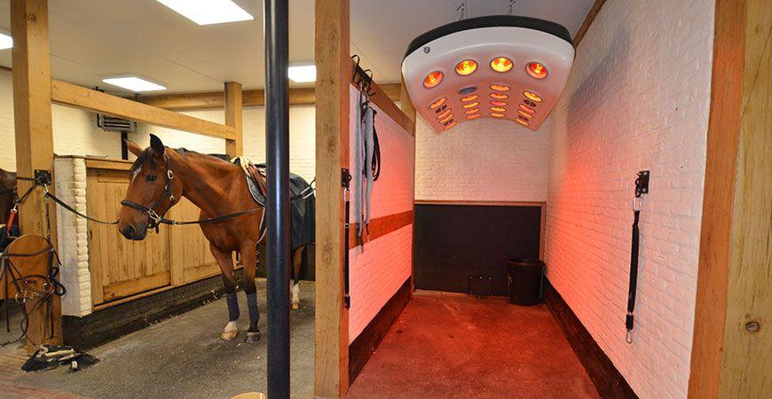 Stephex fait confiance à Horse Stop