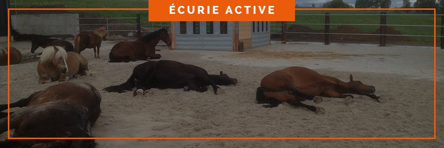 stabilisation drainante pour le confort des chevaux dans une écurie active