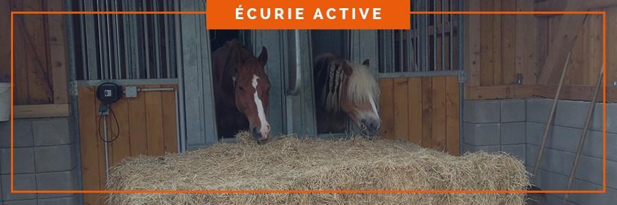 distribution contrôlée du fourrage pour les chevaux dans une écurie active