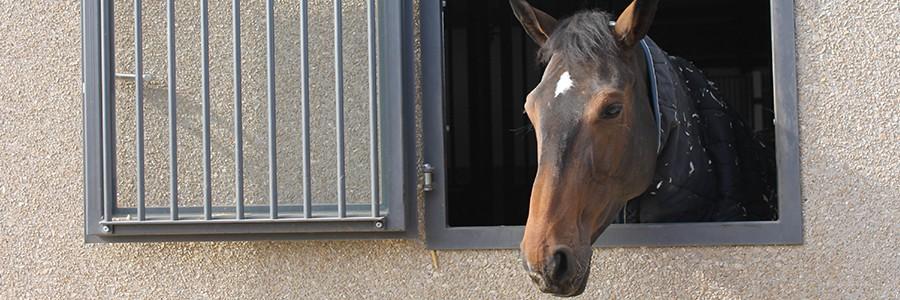 Fenêtre écurie chevaux