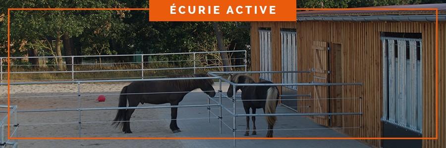 box intégration des chevaux dans une écurie active