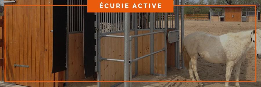 distribution de concentré pour les chevaux dans une écurie active