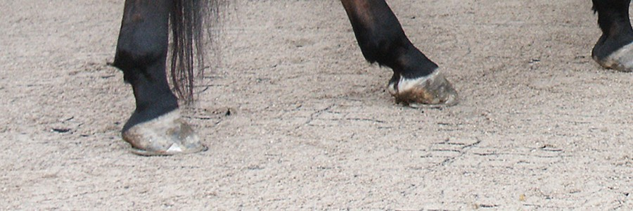 dalle stabilisante pour sol équestre – Horse Stop