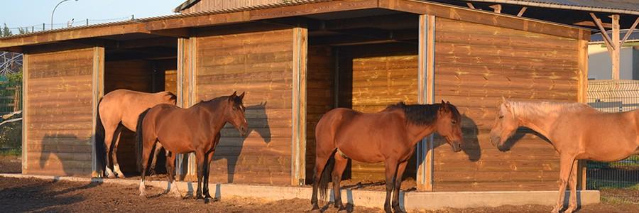 Abri chevaux en bois