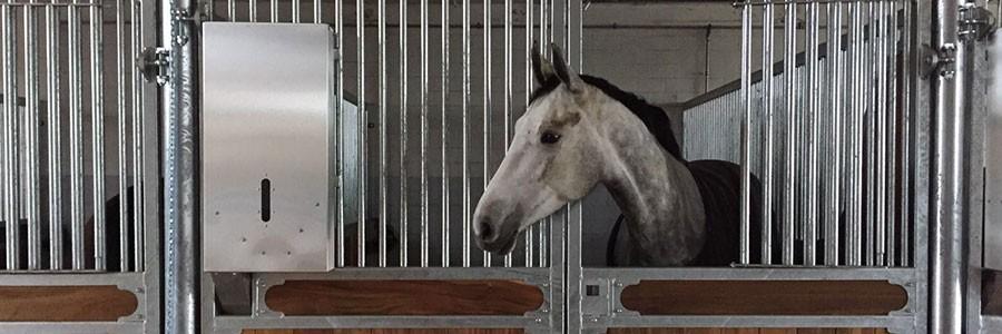 distributeur automatique de concentré pour chevaux