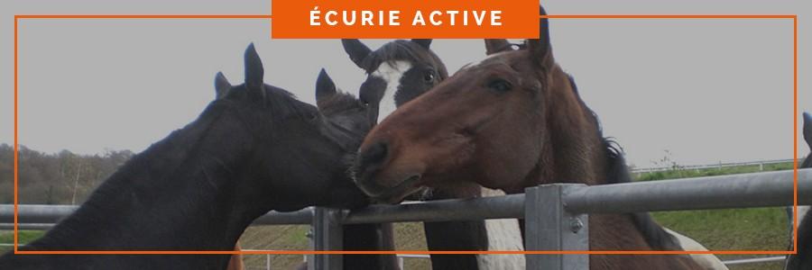 intégration des chevaux dans une écurie active