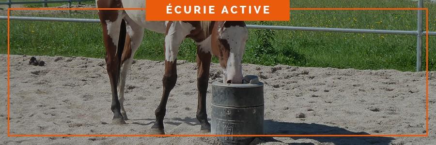 abreuvoir pour l'abreuvement des chevaux une écurie active